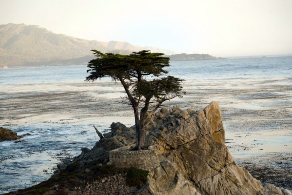 lonely-cypress-tree-in-pebble-beach-california-in-monterey-USA-1600x1066